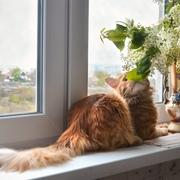 yulenkakotova4's Profile Photo