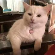 Nadayasseen9290's Profile Photo