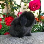 raheeqnu98's Profile Photo
