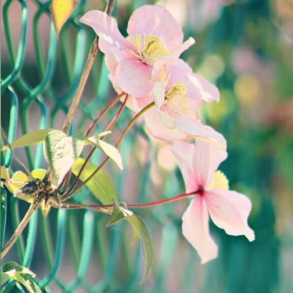 khadijaotaibi123456's Profile Photo