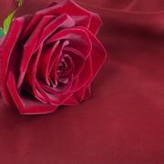 Rubyredrose's Profile Photo