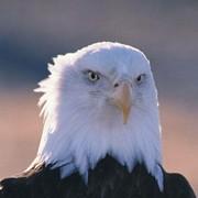 Aquila_Prime's Profile Photo