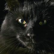 zeinab5608's Profile Photo