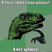 enot_and_vodka's Profile Photo