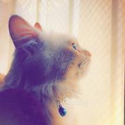 Alqassab_9's Profile Photo