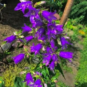 MeowAnya1410's Profile Photo