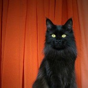nassvll_18's Profile Photo