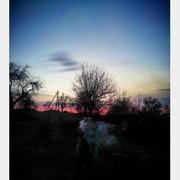 yana_morgan's Profile Photo