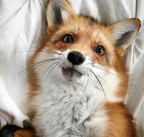 foxxxx__'s Profile Photo