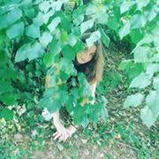yasminelaaniti's Profile Photo