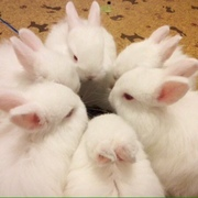 bunnycult's Profile Photo