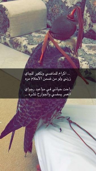 binmubarak67's Profile Photo