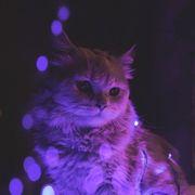 svetli2219's Profile Photo