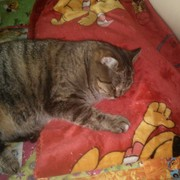 cat8096's Profile Photo